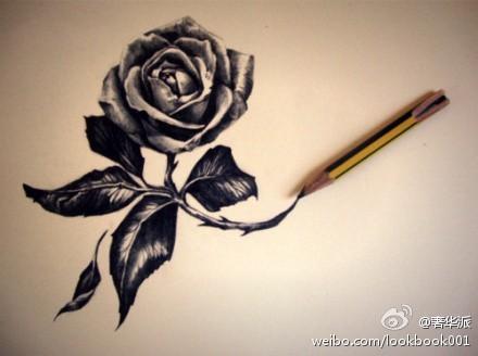 铅笔画出来的玫瑰花